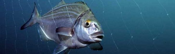 Permalink to Teknik Nelayan Tangkap Ikan Guna Pukat Hanyut