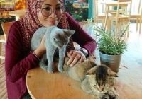 Siti Nordiana Bela Kucing
