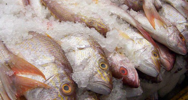 Permalink to Cara Menyimpan Ikan Supaya Kekal Segar Dan Tahan Lama