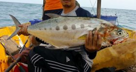 Cara Memasak Ikan Talang Dengan Mudah Dan Sedap