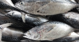 10 Resepi Masakan Ikan Tongkol Popular Boleh Anda Cuba!